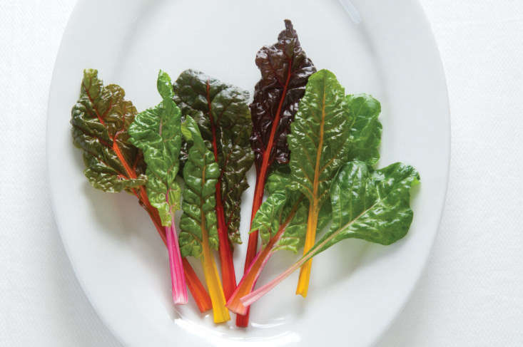 Swiss Chard &#8\2\16;Bright Lights&#8\2\17; from Johnny&#8\2\17;s Select Seeds; \1,000 seeds for \$5.\1\2 at Johnny&#8\2\17;s Selected Seeds.