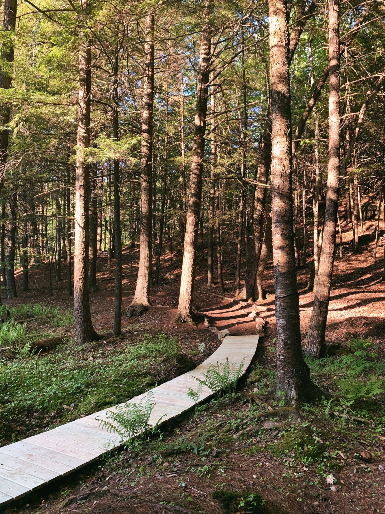 The finished boardwalk, leading into the woods.