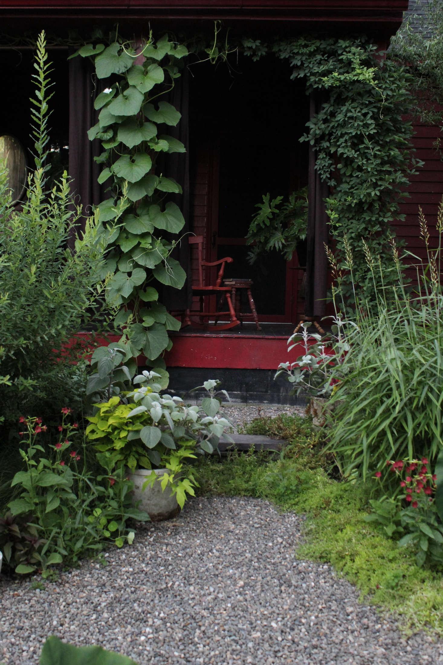 The large leaves of a climbing calabash (Lagenaria siceraria) vine help enshroud the porch. &#8