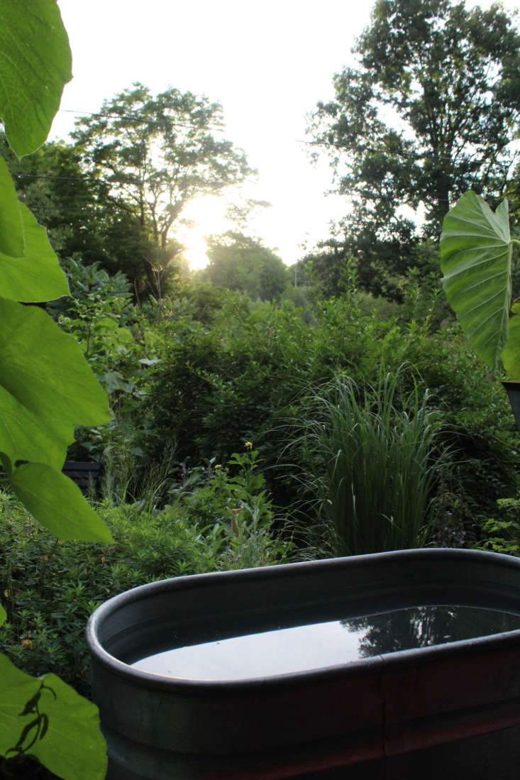 &#8\2\20;The tub is sometimes used for taking a quick dip on a hot day. When it&#8\2\17;s time to refresh the tub, we siphon the old water back into the gardens to give the plants a drink,&#8\2\2\1; says Carter.