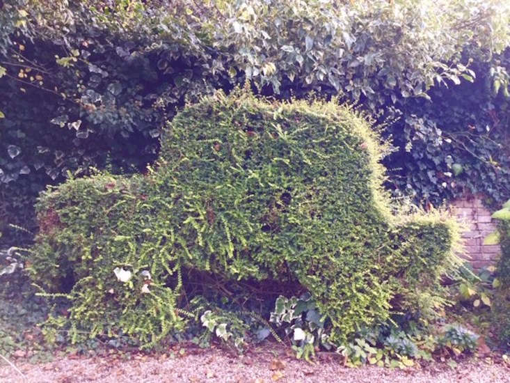 &#8\2\20;I do most of the gardening, but Al cuts the yew and box hedging,&#8\2\2\1; shares Anna. &#8\2\20;The lawn has a Eunoymus japonica 'Ovatus Aureus' which he has shaped into a life sized car! When it's a bit overgrown, like in this picture, I think that it looks like it's going fast!&#8\2\2\1; Photograph courtesy of Anna and Allan Joyce.
