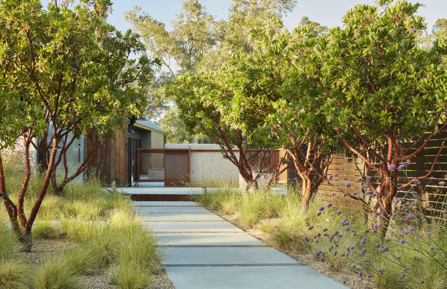 A stone pathway leads to the front gate. Along the sides are soft grasses and Arbutus 'Marina' trees.