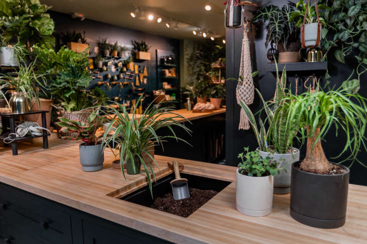 &#8\2\20;A central potting station was the key hub that Greendigs desired,&#8\2\2\1; says David. &#8\2\20;Additionally,  a health and wellness lounge, a DIY area, a wash station, and a content creation studio. And of course, places for plants—lots and lots of plants!&#8\2\2\1;