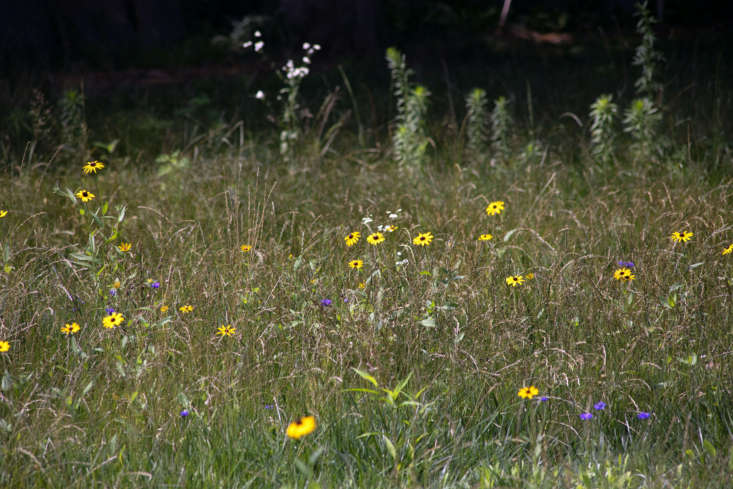 In place of a mundane lawn, the meadow now encourages active wildlife within the property and creates a beautiful vista from the house.