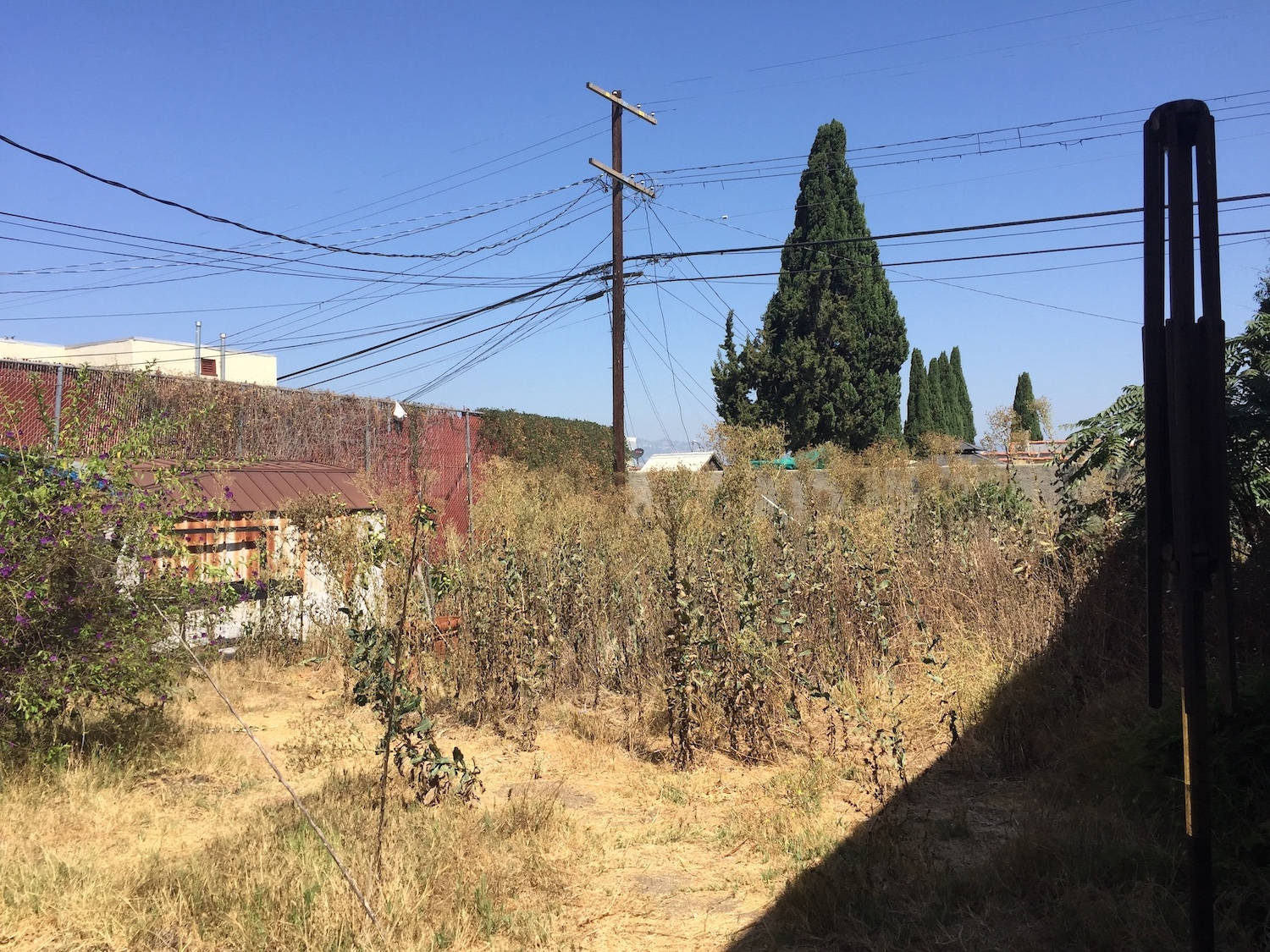 This is what the yard, approximately 4,000 square feet, looked like when Rozae found the property.