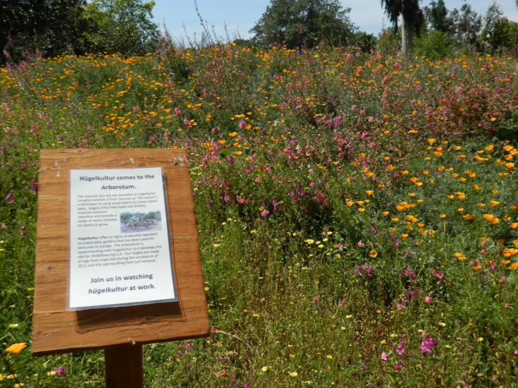 Wildflowers thriving on a hugelkultur mound at the Los Angeles County Arboretum in Arcadia, CA. Photograph by Jengod via Wikimedia.