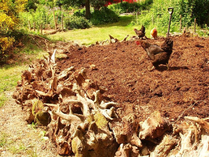 Permaculture in Portland, OR - cover