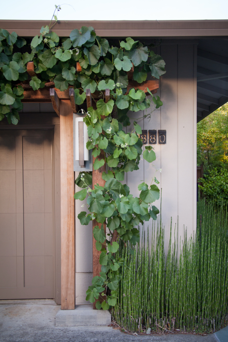 A grape vine winds and weaves its way up the Asian-inspired wood trellis.
