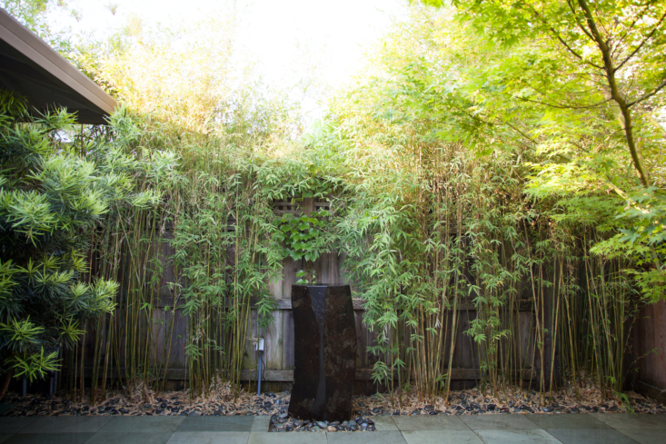 An orderly line of bamboo is the perfect backdrop to the stone water feature.