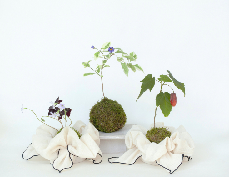 A trio of kokedama arrangements. (Kokedama is the Japanese technique of wrapping a plant in a moss ball.) Yunice wrapped a couple in reusable Korean bojagi wrap.