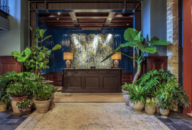 """Playing with scale also helps create a rhythm through each area of plants that amplify the dramatic interiors. Stately forms of fig and Alocasia provide a backdrop to glossy evergreens. """"The plants bring a domestic feeling but they also create an amazing atmosphere,"""" says Cameron, who also created the lush terraces and gardens at Annabel's and The Ivy Chelsea."""