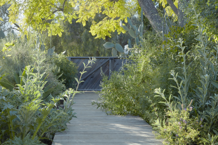 The view from inside the gate. Lining the simple boardwalk are artichokes, white sage, and black sage.
