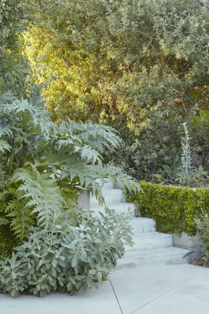 At the bottom of the stairs, white sage mingles with artichoke.