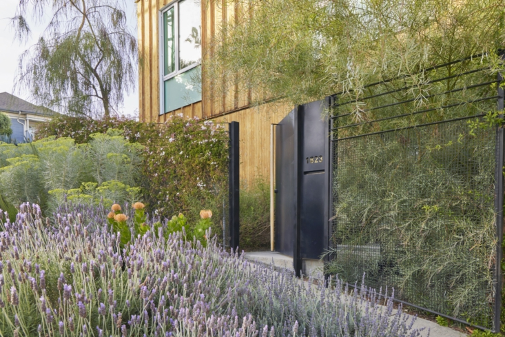 The wire mesh fence designed by Fredrik is overgrown with jasmine in places for a natural (and sweet-smelling) privacy screen.