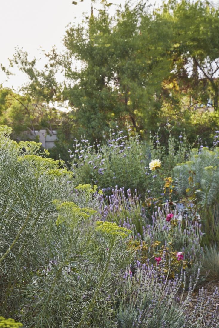 Plantings in Terremoto Grafton Garden