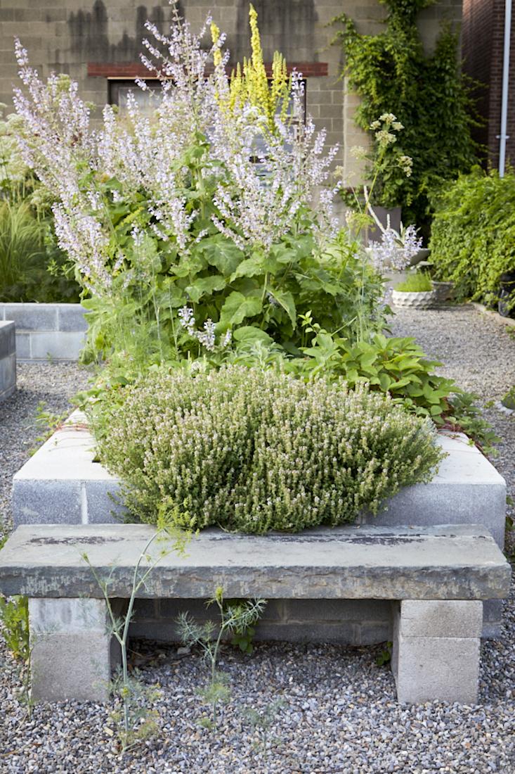 Une profusion de thym au premier plan.  Photographie de Dana Gallagher, de Garden Visit: Mindful Neglect in Lindsey Taylor 217;s Rambunctious Cinderblock Garden.