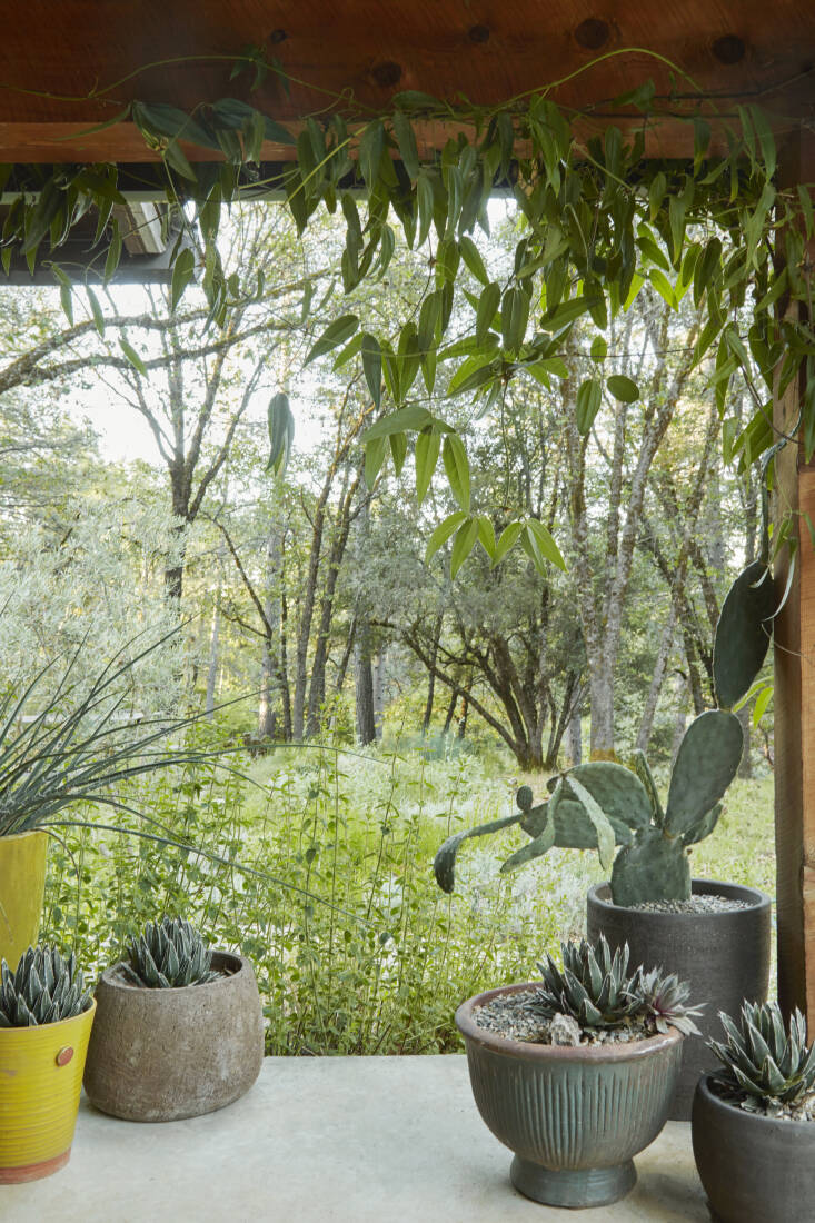 Caitlin decorates her porch with pots purchased from Flora Grubb Gardens in San Francisco. Agave &#8\2\16;porcupine&#8\2\17; fills most of them, while a Clematis armandii vine frames her forest view.