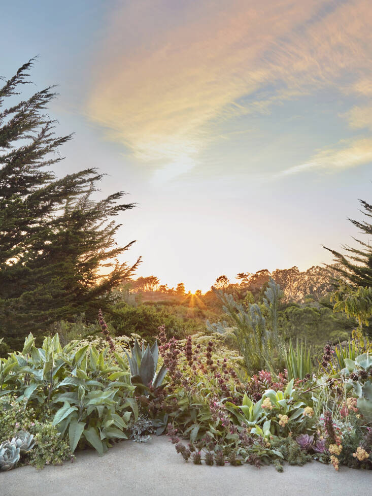 &#8\2\20;In Santa Cruz, I have been working to incorporate coastal bush lupine and Artemesia, which are on the coastal dunes nearby.&#8\2\2\1;
