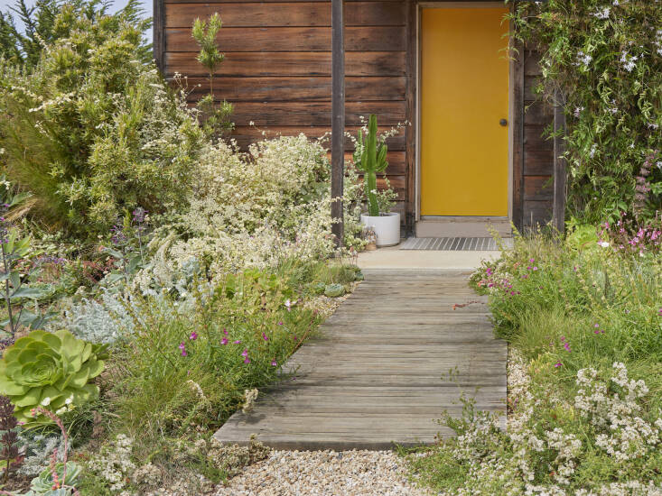 A boardwalk made from recycled redwood fencing leads to the sunny front door. Caitlin rents her Santa Cruz cottage, but she still tends to it with the same care as if she owned it. &#8\2\20;I think a lot of people don't garden when they are in rentals, but it is really worth it, even if just starting with a few seeds!&#8\2\2\1;