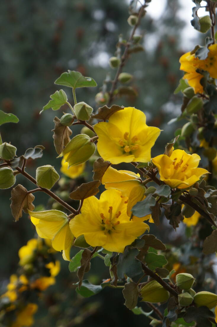 Photograph by Katie Hetrick via UC Davis Arboretum and Public Garden on Flickr.