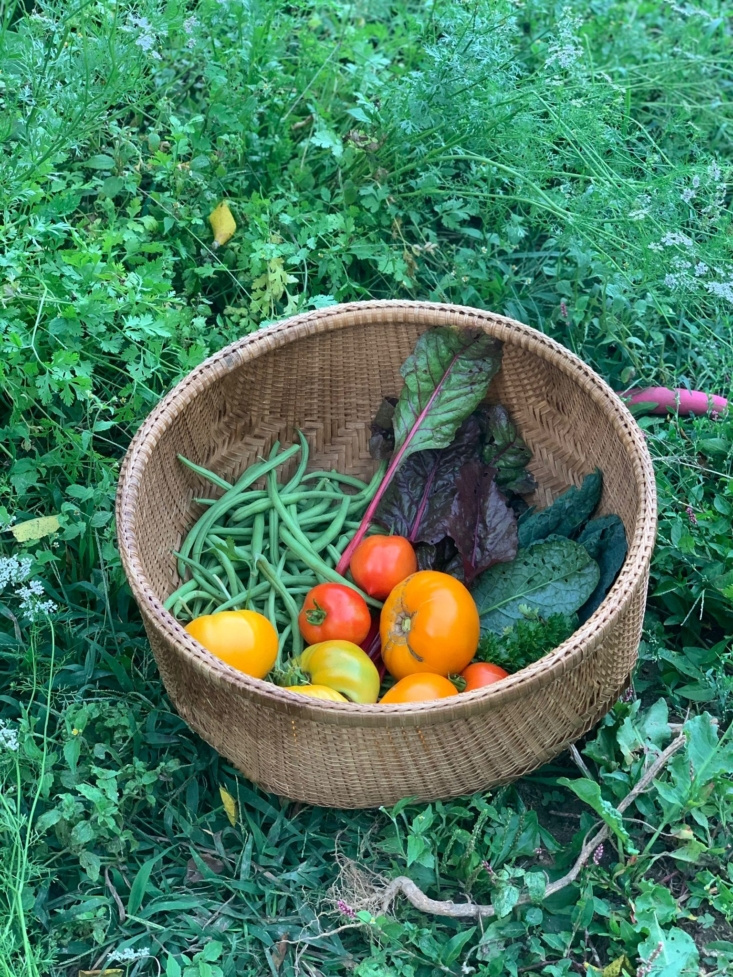 A sampling of the crops we grew this summer.