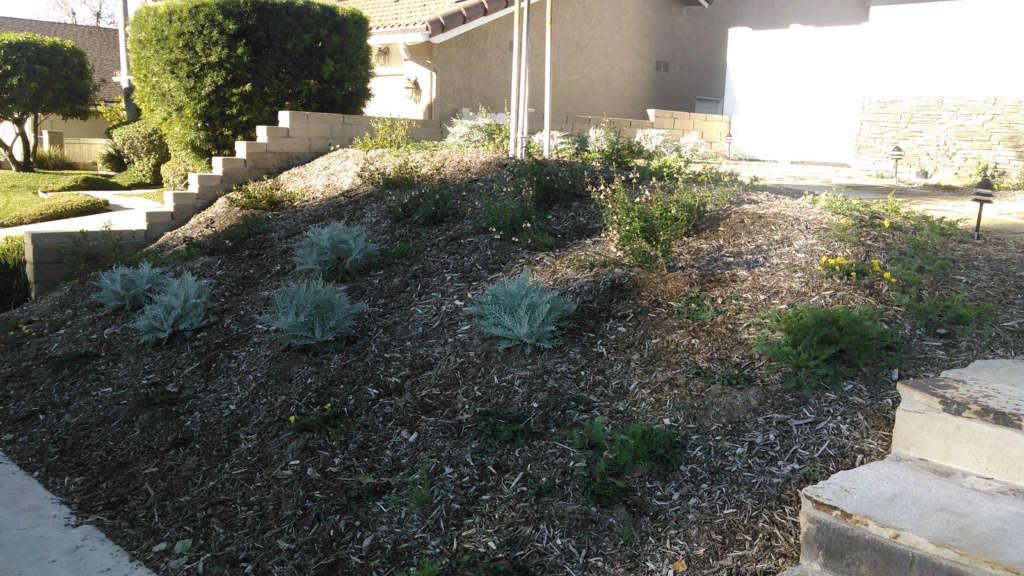 Front garden in 2015