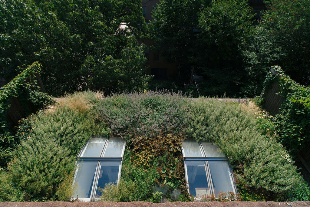 Green roof and garden beyond
