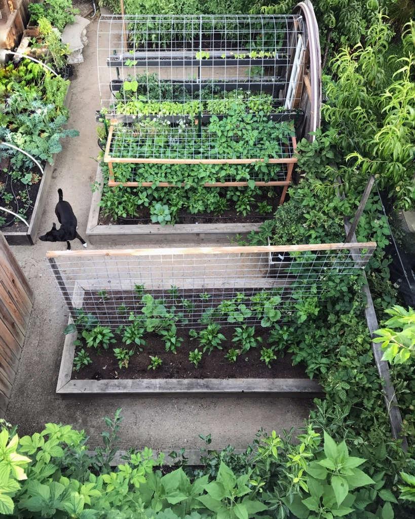Vegetable garden from above