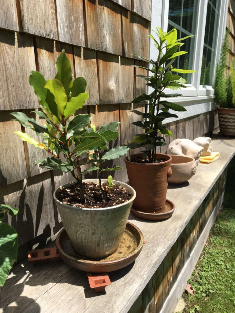 Potted plants and drying pottery