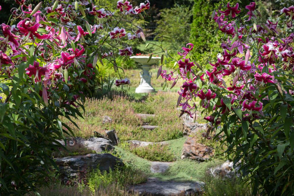 Orienpet Lilies & Rock garden steps photo by Ren Nickson