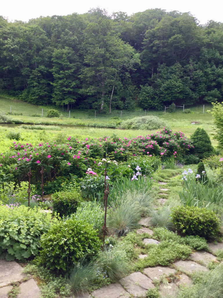 Herb garden and Rugosa rose hedge. By Betsy