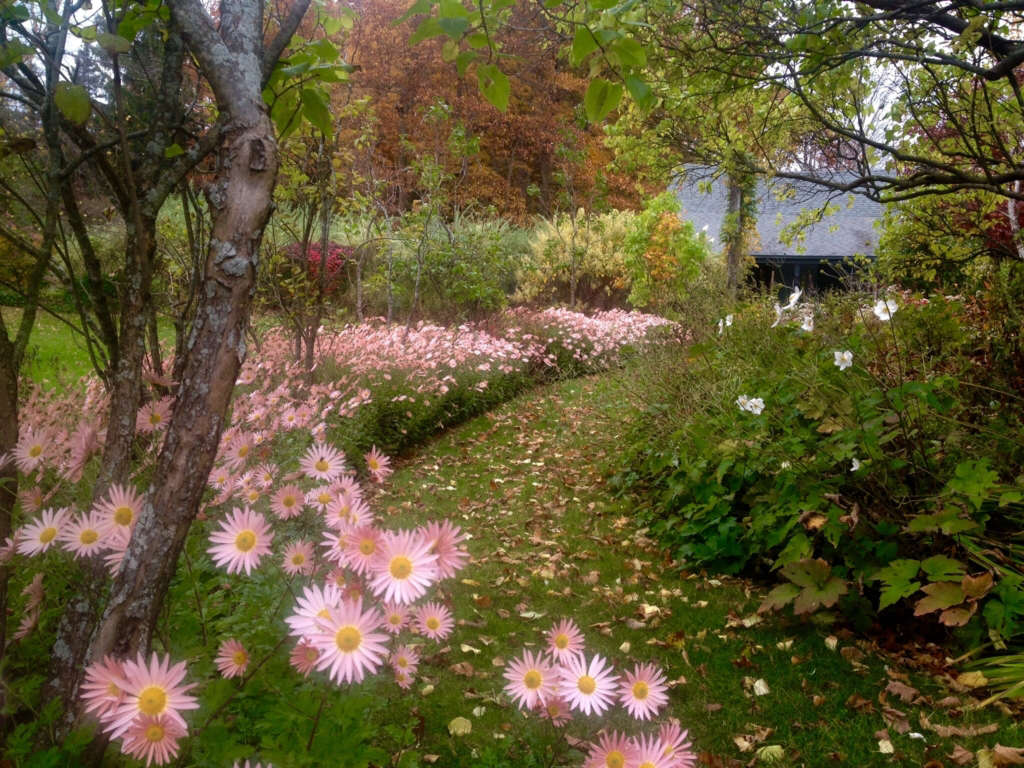 Sheffield daisies and lilac allee in autumn by Betsy
