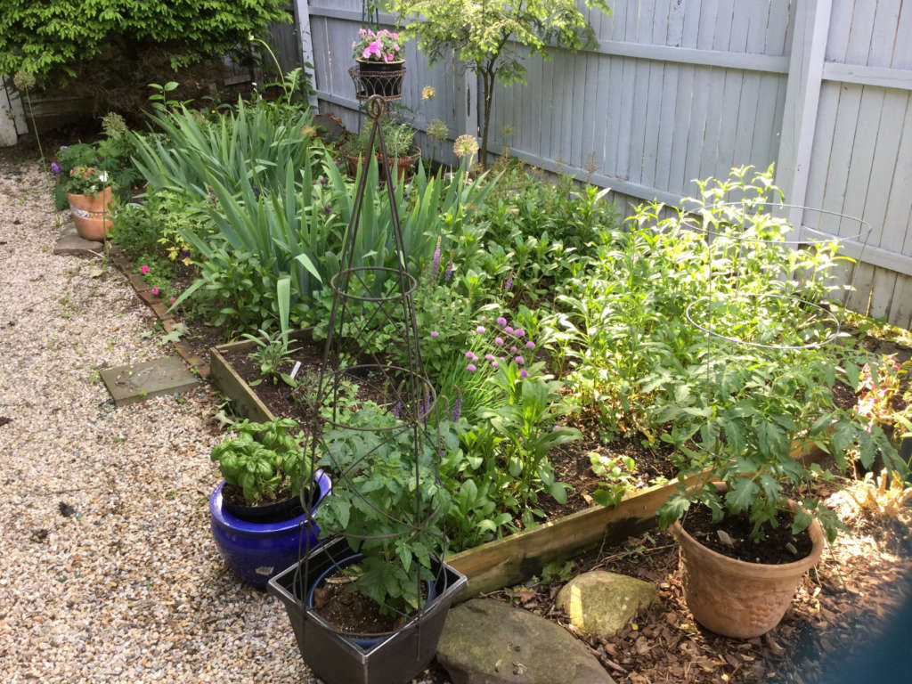 Raised beds and pots of vegetables
