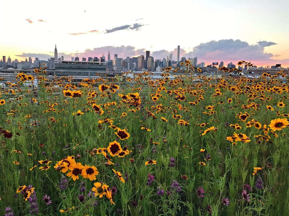 Kingsland Wildflowers 4