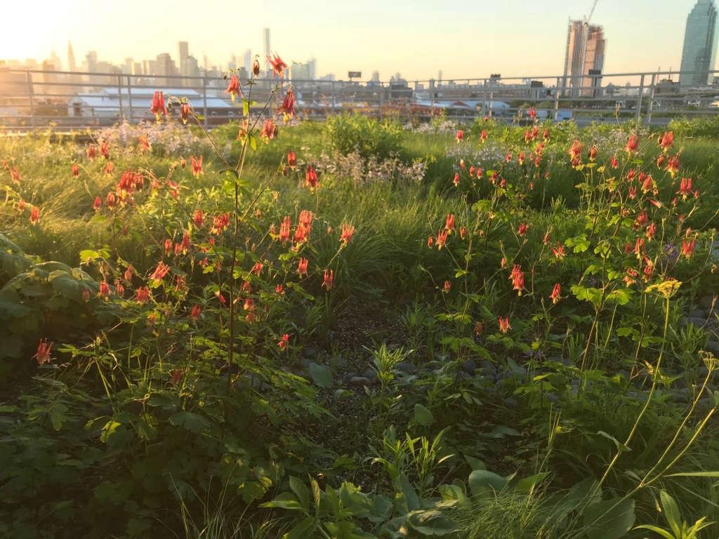 Kingsland Wildflowers 9