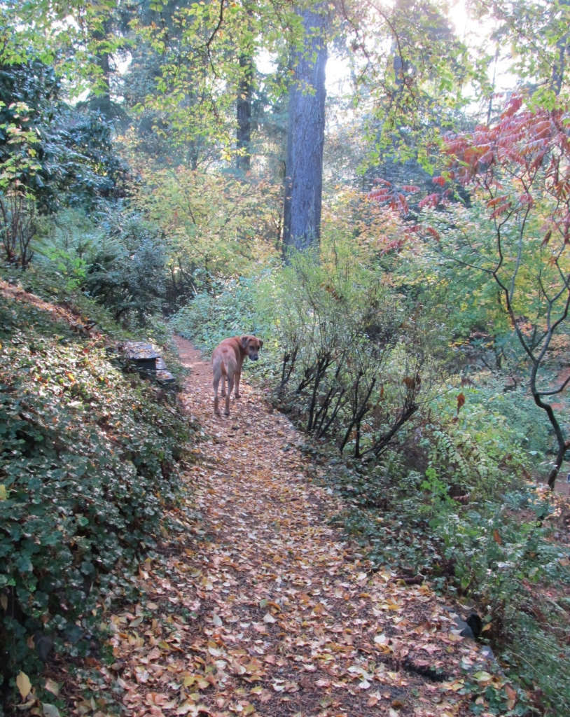 Our dog Willie leads the way down to the woods.