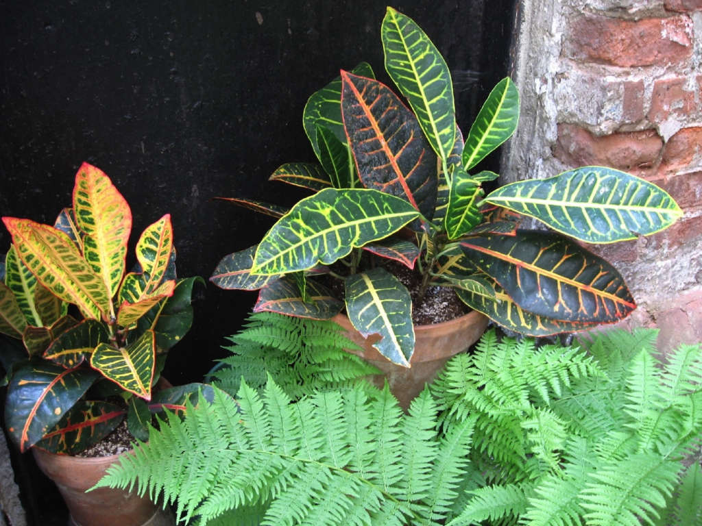House plants nestled in an old coal chute