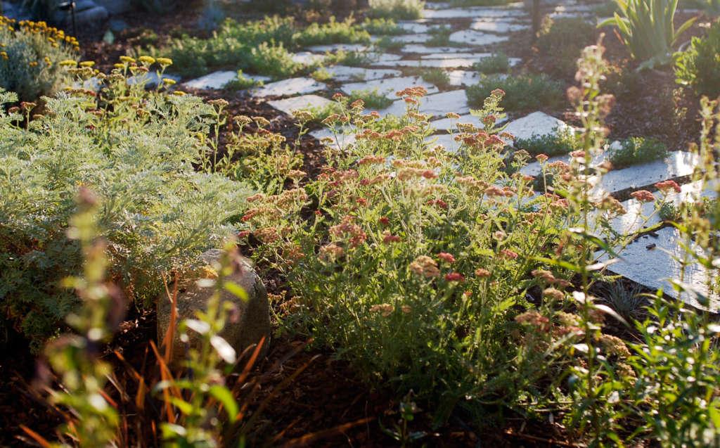 Golden Hour Plants