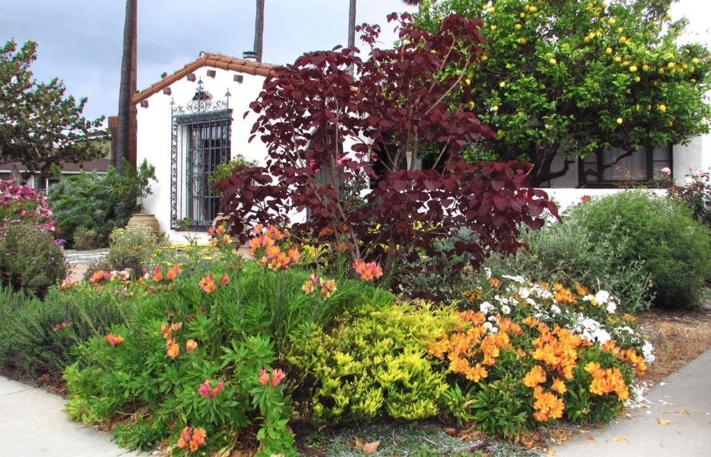 Colorful Plants Provide Privacy from Neighbors