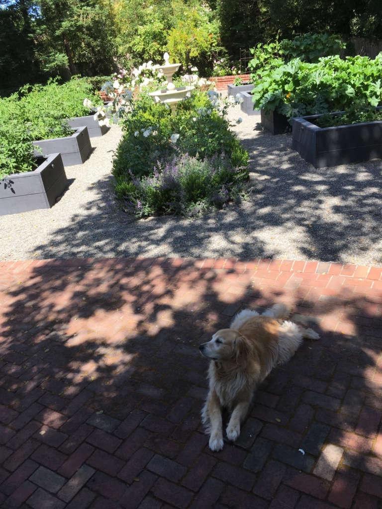 Holly Guarding the Garden