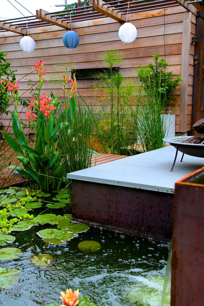 Contemporary Water Lily Pond