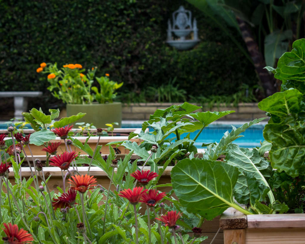 A Garden Space for Beauty and Food