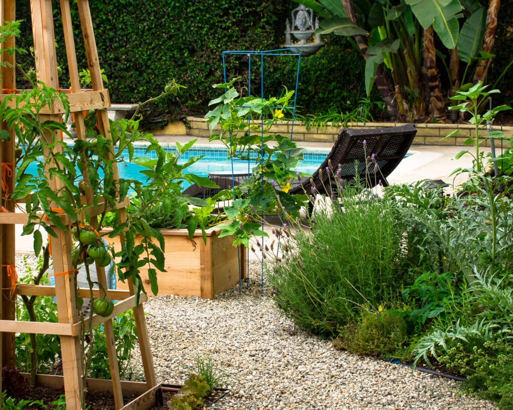 Perennials and Fruit Trees Fill the Edges