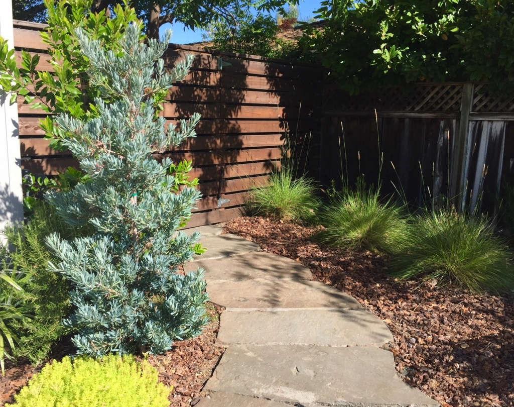 Ipe fencing and garden gate.