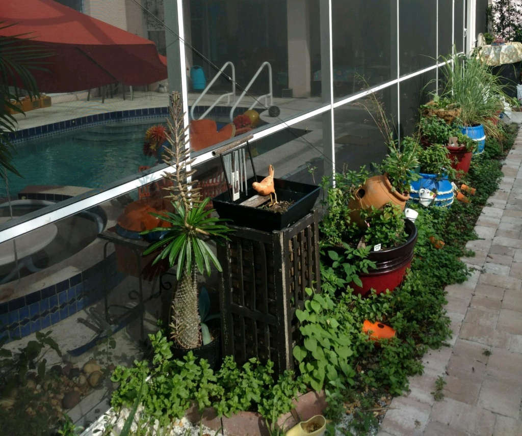 Herbs and Vegetable Area