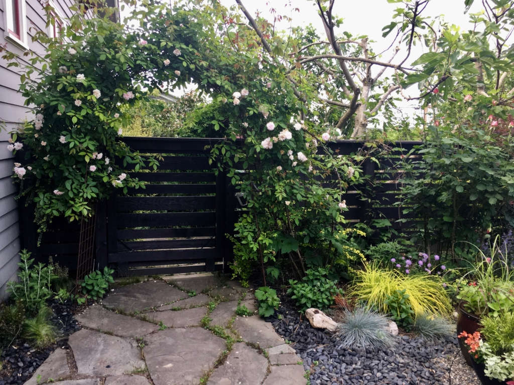 Nordic fence, rose arbor and black river stones.