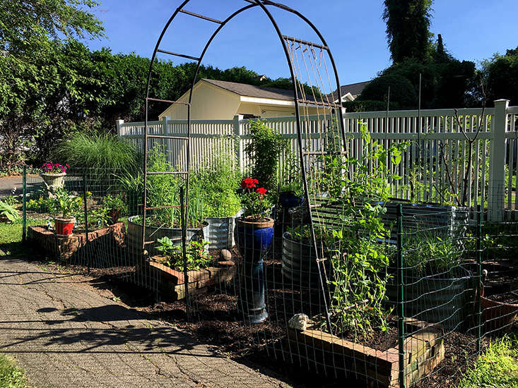 Garden Intro
