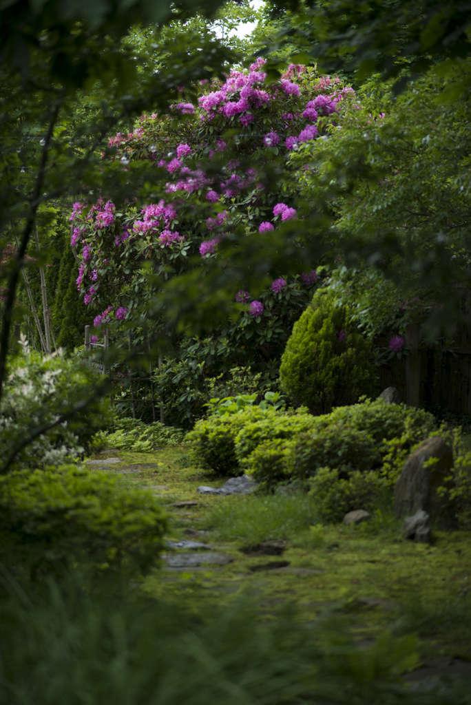 Moss paths of the Roji