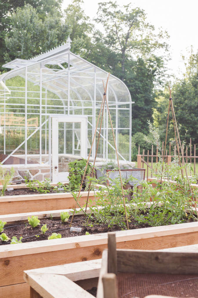 Patience through Gardening