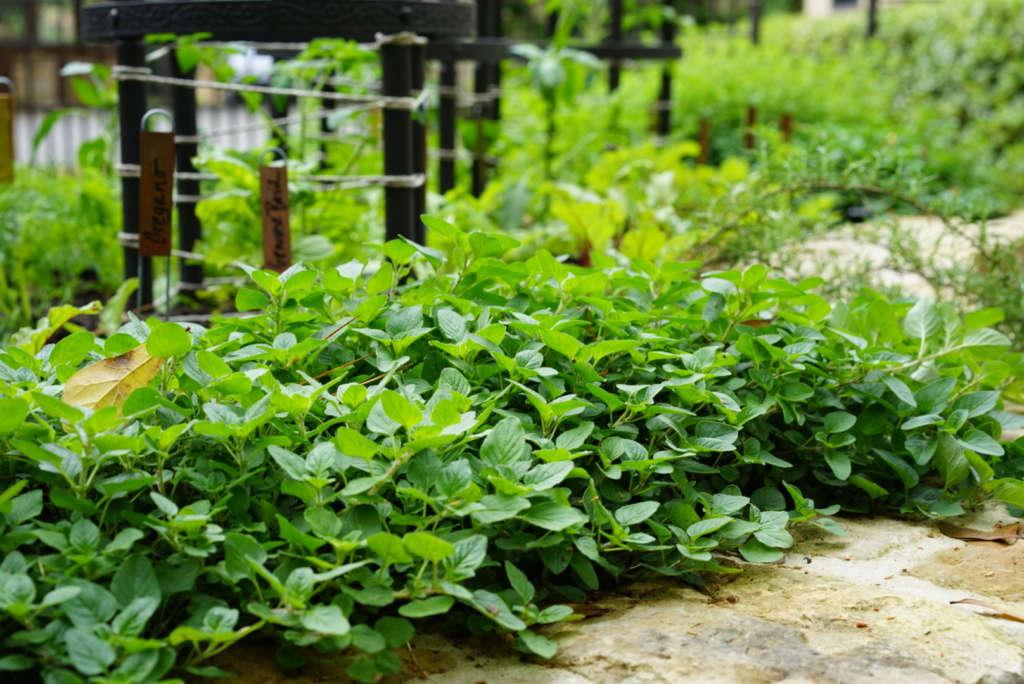 Herbs Every Season